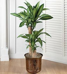 Tropical House Plants Identifying Common Low Light Indoor