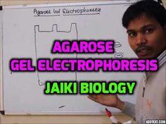 Jaiki biology: AGAROSE GEL ELECTROPHORESIS PART I