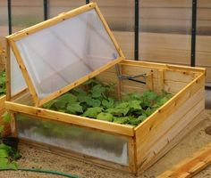 Grow food all year long and start spring plants early with this cold frame.
