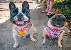 Flower fabric Dog harness, dog leash harness, pet harness collar, French bulldog, Custom dog harness, Pug, Japanese Kimono, dog collar  This listing is ONLY FOR HARNESS! Harness size works perfectly fine on general dog breeds, not just for Frenchie and Pug.   MATCHING COLLARS https://www.etsy.com/listing/559156371/dog-collar-custom-dog-collar-collar-and?ref=listing-shop-header-3   MATCHING LEASHES https://www.etsy.com...