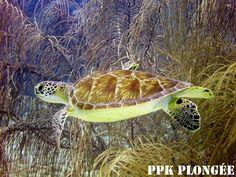 PPK Plongée Guadeloupe - Google+