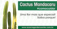 141209-cactus-mandacaru--acacia-garden-center-como-cuidar-plantas-paisagismo-jardinagem-rio-de-janeiro-rj-horto-chacara