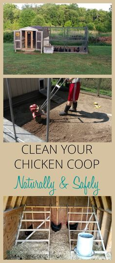 Chicken Coop - Learn how to clean your chicken coop naturally to promote a healthy flock that lays large abundant eggs year round. via /SLcountrygal/ Building a chicken coop does not have to be tricky nor does it have to set you back a ton of scratch. Chicken Barn, Chicken Coup, Chicken Life, Best Chicken Coop, Backyard Chicken Coops, Building A Chicken Coop, Chicken Runs, Chickens Backyard, Chicken Coop Large