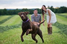 engagement session with dog, engagement session with pets id like this with a puppy we plan to get watxh our love grow as our puupy grows :)