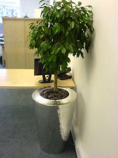 Standard Ficus Benjamina in beaten aluminium planter