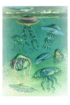 JELLYFISH antique prints natural science art by AntiqueWallPrints