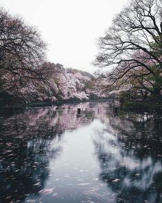 "6,497 mentions J'aime, 34 commentaires - Takashi Yasui (@_tuck4) sur Instagram: ""spring rain #RECO_ig"""