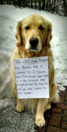 Dog Shaming features the most hilarious, most shameful, and never-before-seen doggie misdeeds. Join us by sharing in the shaming and laughing as Dog Shaming reminds us that unconditional love goes both ways. Funny Dog Memes, Funny Animal Memes, Funny Animal Pictures, Cute Funny Animals, Cute Baby Animals, Funny Cute, Funny Dogs, Funniest Memes, Hilarious