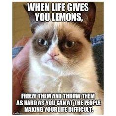 Grumpy cat and funny cat memes! - Polyvore