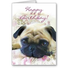 Happy Birthday Pug Greeting Card Greetings Belated Cards