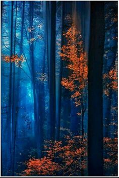 Deep Blue Forest