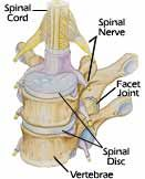 An Article on the Facet Joints