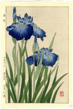 Yuichi Osuga Japanese Woodblock Print Blue Iris 1954 RARE | eBay