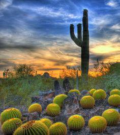 THE SONORAN DESERT, ARIZONA UNITED STATES