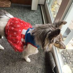 All dressed up for the Memorial Day picnic