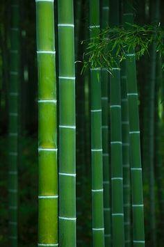 Bamboo grove in Tenryu-ji temple, Kyoto, Japan by Damien Douxchamps