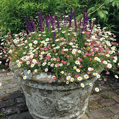 Erigeron Stallone Flower Plants £ By Mr Fothergills Seeds A Fantastic .Erigeron Stallone Flower Plants £ By Mr Fothergills Seeds A fantastic plant with lots of small, daisy-like flowers that fits in patio Cottage Garden Design, Diy Garden, Garden Projects, Cottage Gardens, Shade Garden, Container Flowers, Container Plants, Container Gardening, Container Houses