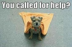 Super Dog!  It could be my little Percy!