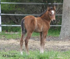 our 2015 Lopin Lazy filly. Out of A Precious Investment. Her registered name is Lazy Lopin Lizzy!