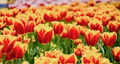 Flowers' roles considered in ecosystems and economics   Science News