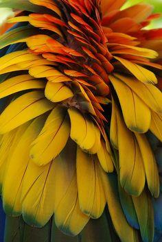 Macaw Feathers by jmberman1