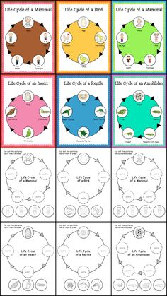 Animal Life Cycle Posters and Cut and Paste Worksheets >> Part of the Animal Classifications & Life Cycles Bundle