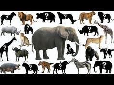 zvuky zvířat pro děti online (100 zvířat v lese, zvířat v zoo, zvuky domácích zvířat) - YouTube