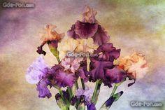 descarca imagini de fundal desen, Irisi, vopsele, Flori Imagini de fundal gratuite pentru rezoluia desktop 2048x1366 — imagine №535176