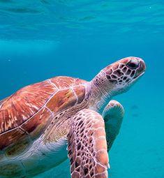 Doen op Curacao: duiken