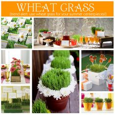 With a little advance planning, I could actually do some of these wheat grass centerpieces.