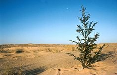 Weihnachten und Silvester in der algerischen Sahara. Manfred, Country Roads, Awesome, Nature, Pictures, Numeracy, Travel Report, New Years Eve, Christmas