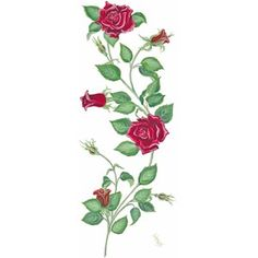 Pin Vine Tattoo Designs By Obo Bobolina Vines Tattoos Ivy Rose picture to pinterest. Description from tattoopins.com. I searched for this on bing.com/images
