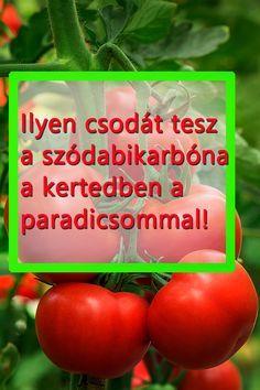 Herb Garden In Kitchen, Home And Garden, Tomato Garden, Tropical Plants, Pest Control, Organic Gardening, Container Gardening, Techno, Herbs