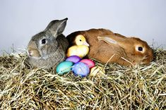 Happy Easter Sunday What is the meaning behind it and why do . Funny Easter Images, Easter Images Religious, Easter Images Free, Happy Easter Photos, Easter Bunny Pictures, Happy Easter Wishes, Real Easter Bunny, Bunny Bunny, Bunny Rabbits