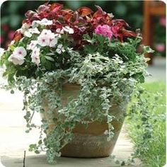 Container Gardening - great site for ideas, care and DIAGRAMS of plants used!!