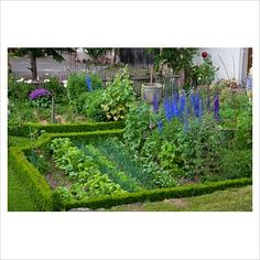Kitchen garden edged with a low clipped box hedge. Beta vulgaris, radishes, salads, onions and perennials