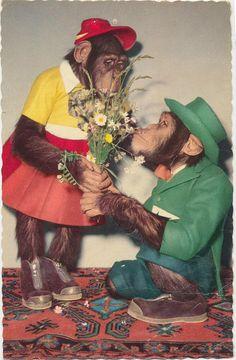 pc apen veldboeket 1960 by janwillemsen, via Flickr