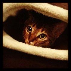I'm in ma cat cave, ok?