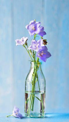 아름답고 외롭다. Miniature Photography, Glass Photography, Photography Backdrops, Flower Vases, Flower Arrangements, Realistic Flower Drawing, Glass Planter, Design Seeds, Mini Paintings