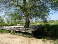 tapchan over the canal, with a tree in the center