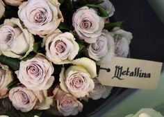 Metallina Rose  Four Seasons Quality International Floriculture Flower show