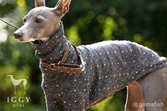 This Italian Greyhound sweater is hand-made product from Japan. One of the…