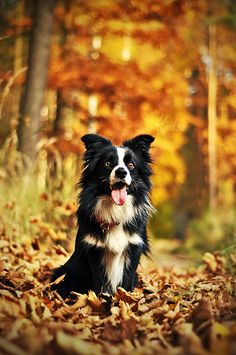 Dogs and Puppies : Dogs - Image : Dogs and Puppies Photo - Description Dogs Photography by Kasia Sharing is Caring - Hey can you Share this Photo ! Beautiful Dogs, Animals Beautiful, Cute Animals, Cute Dog Photos, Dog Pictures, Cute Dogs And Puppies, I Love Dogs, Doggies, Photos Originales