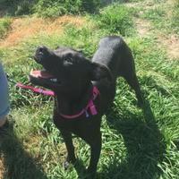 Panama City Fl Feist Meet Dalton A Pet For Adoption Pet