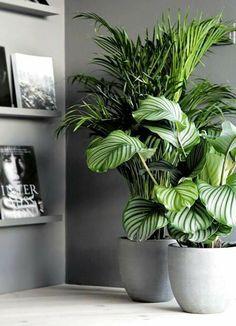 House Plants Decor, Plant Decor, Home Plants, Interior Plants, Interior And Exterior, Interior Garden, Living Room Designs, Living Room Decor, Decoration Plante