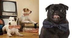 Dog bow ties. I need to get me a couple of these bad boys!