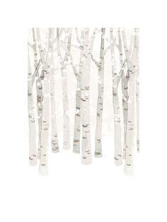 Birch Woods in Winter - Four Wet Feet