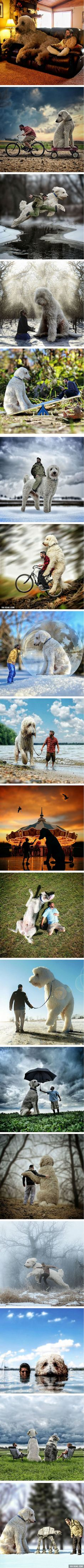 Photographer Photoshops His Dog Into A Giant For Joining His adventures