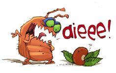 STORY: University of Kentucky researchers say kidney bean leaves may eradicate bedbugs