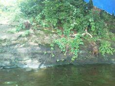 Isla de los changos